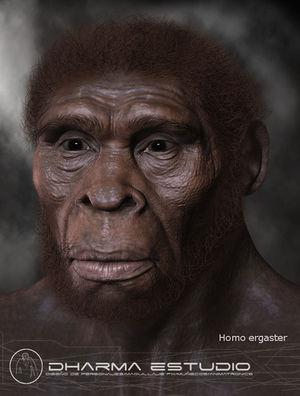 paranthropus boisei werkzeuge